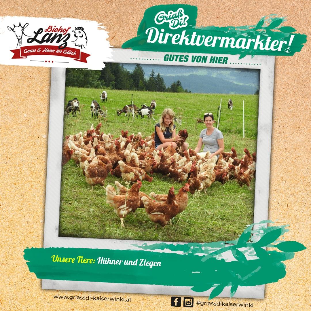 Direktvermarkter-Fotostory-Lanz-4-Unsere-Tiere-min