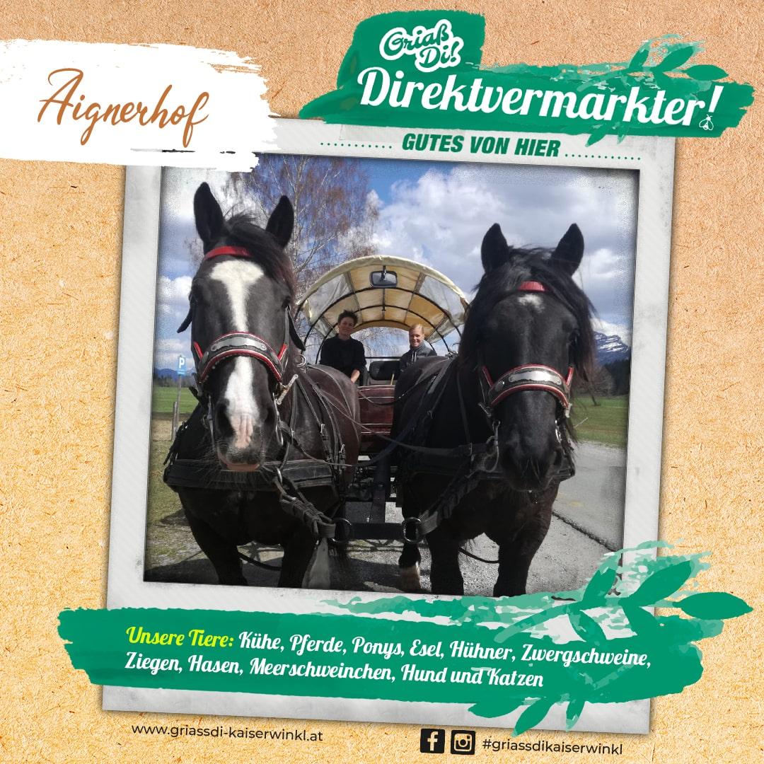 Direktvermarkter-Fotostory-Aignerhof-5-Unsere-Tiere-min
