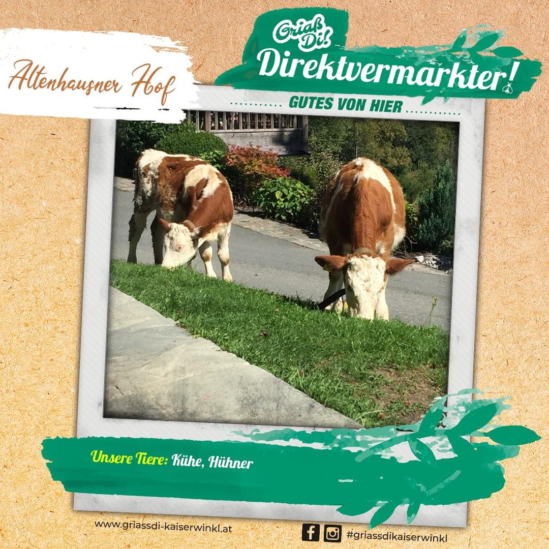 Direktvermarkter-Fotostory-Altenhausner-3-Unsere-Tiere-min