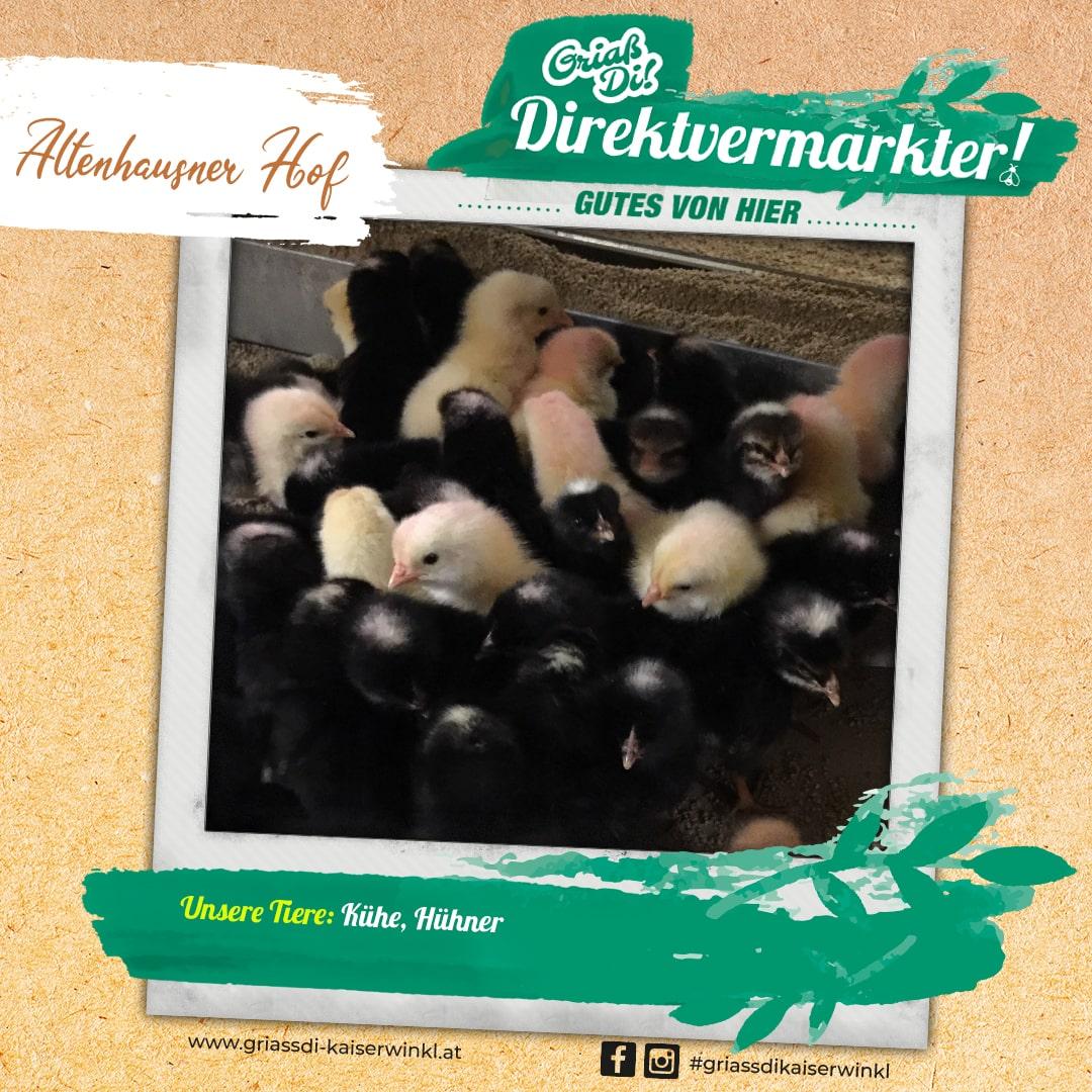 Direktvermarkter-Fotostory-Altenhausner-5-Unsere-Tiere-min