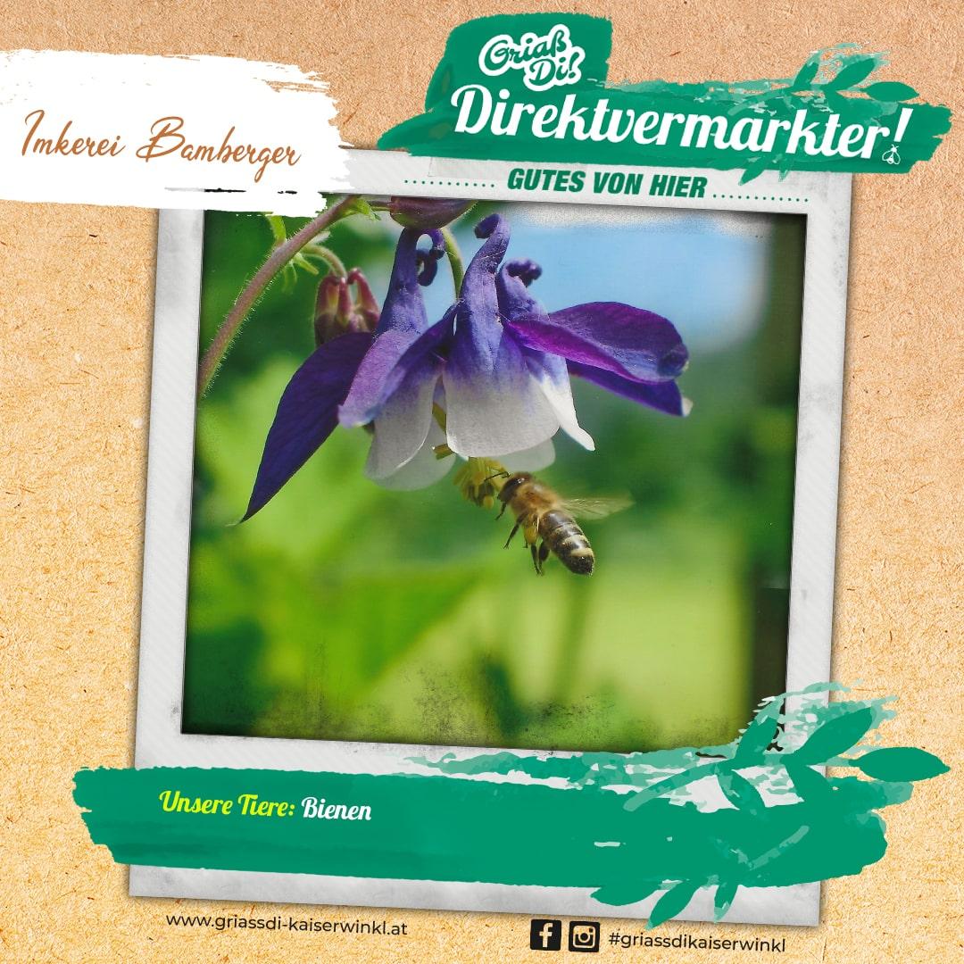 Direktvermarkter-Fotostory-Bamberger-3-Unsere-Tiere-min