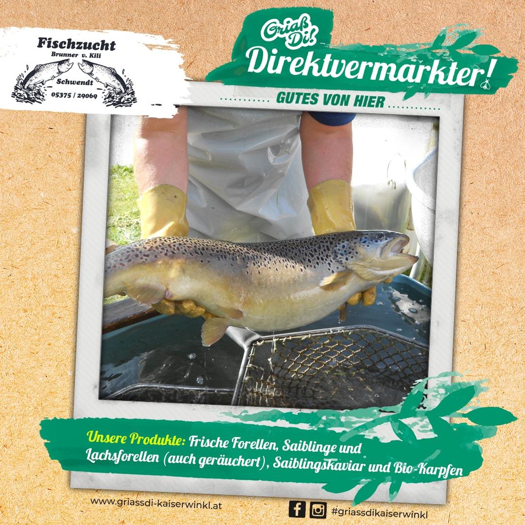 Direktvermarkter-Fotostory-Brunner-4-Unsere-Produkte-min
