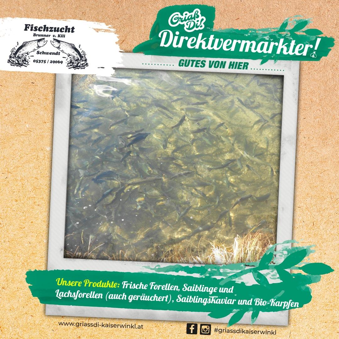Direktvermarkter-Fotostory-Brunner-6-Unsere-Produkte-min