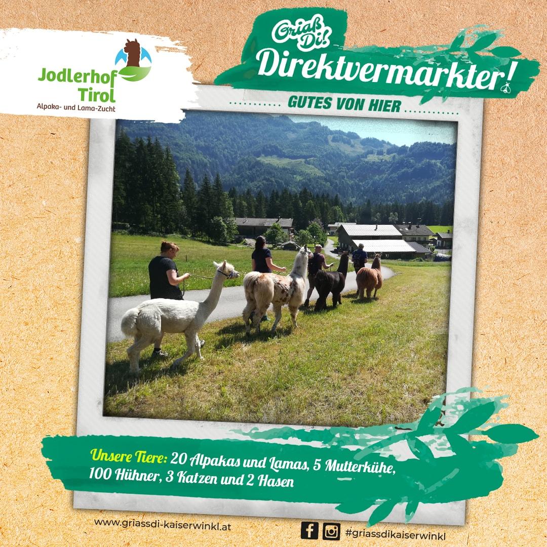Direktvermarkter-Fotostory-Jodlerhof-3-Unsere-Tiere-min