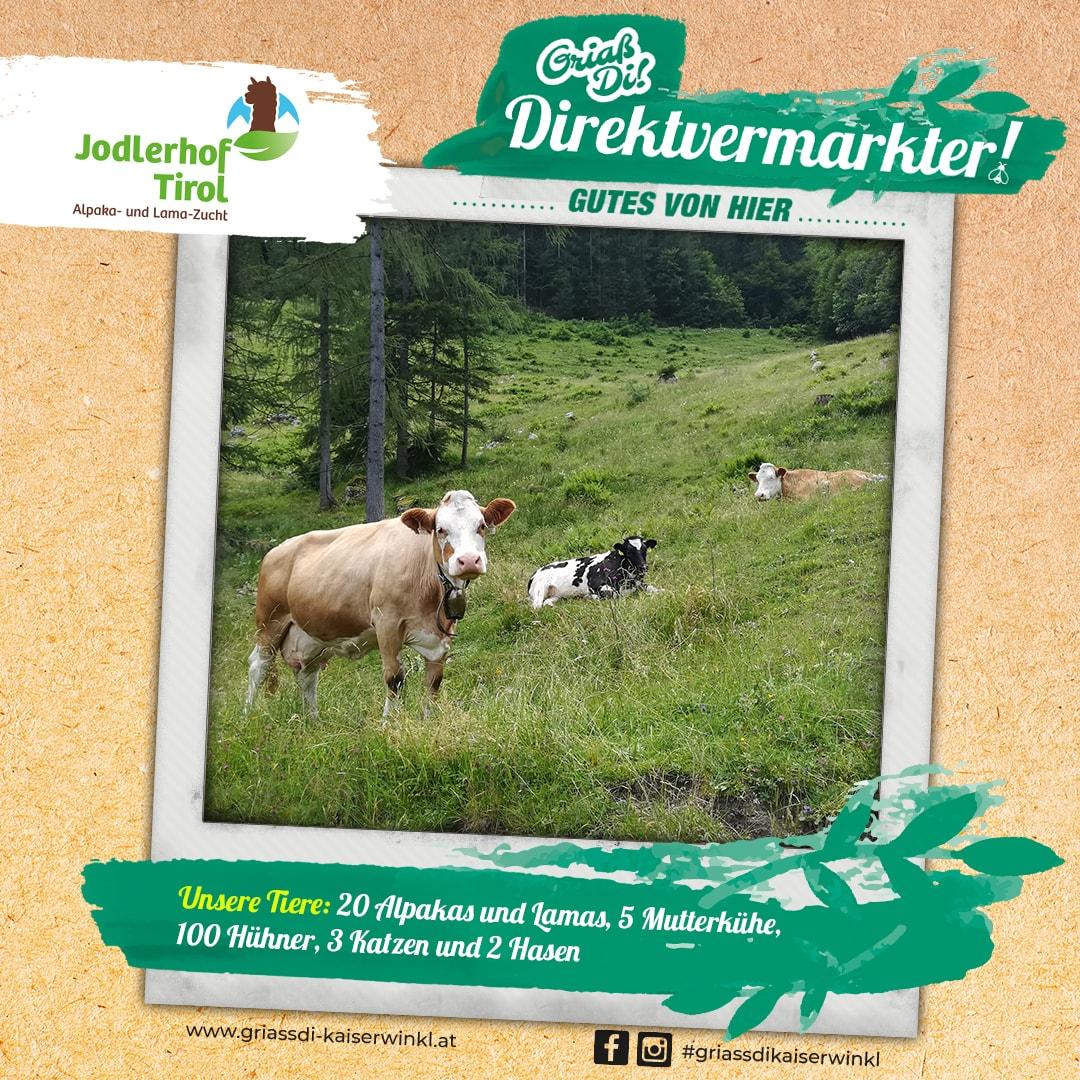 Direktvermarkter-Fotostory-Jodlerhof-4-Unsere-Tiere-min