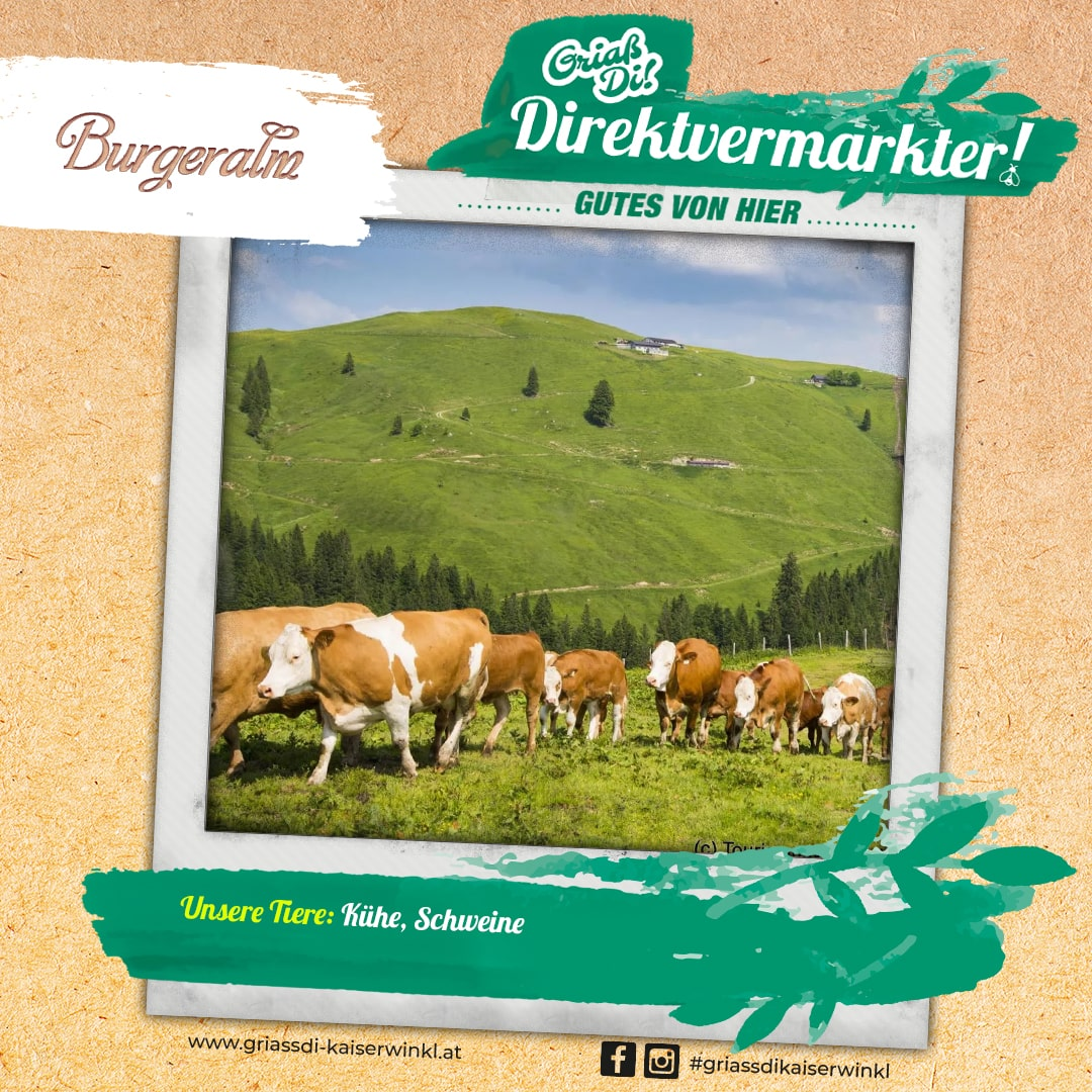 Direktvermarkter-Fotostory-Burgeralm-3-Unsere-Tiere-min