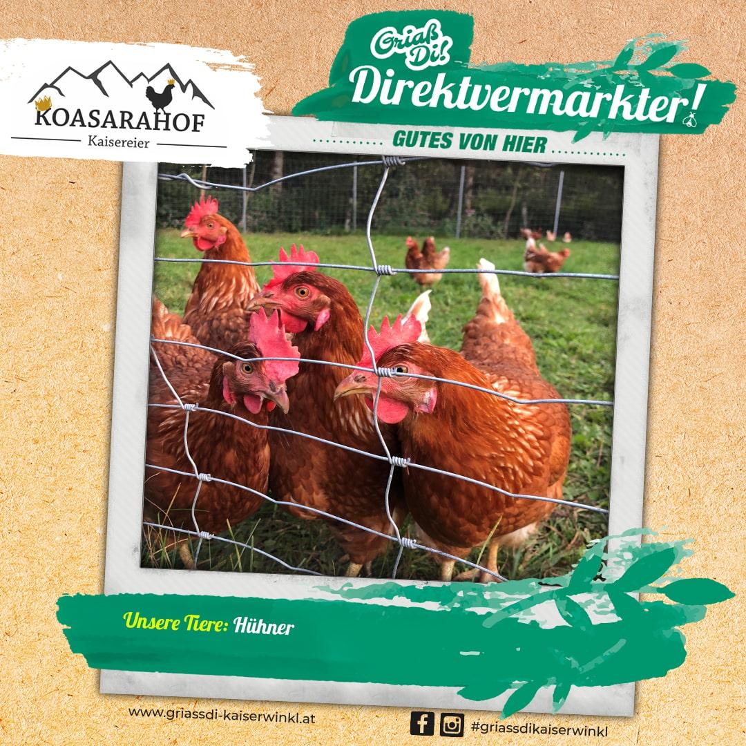 Direktvermarkter-Fotostory-Koasarahof-3-Unsere-Tiere-min